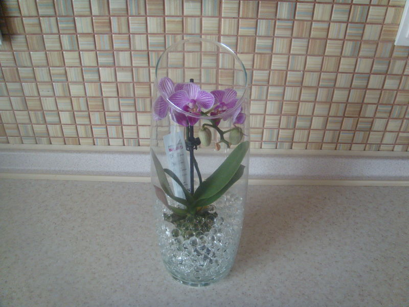 Пересадка мини орхидеи в домашних условиях