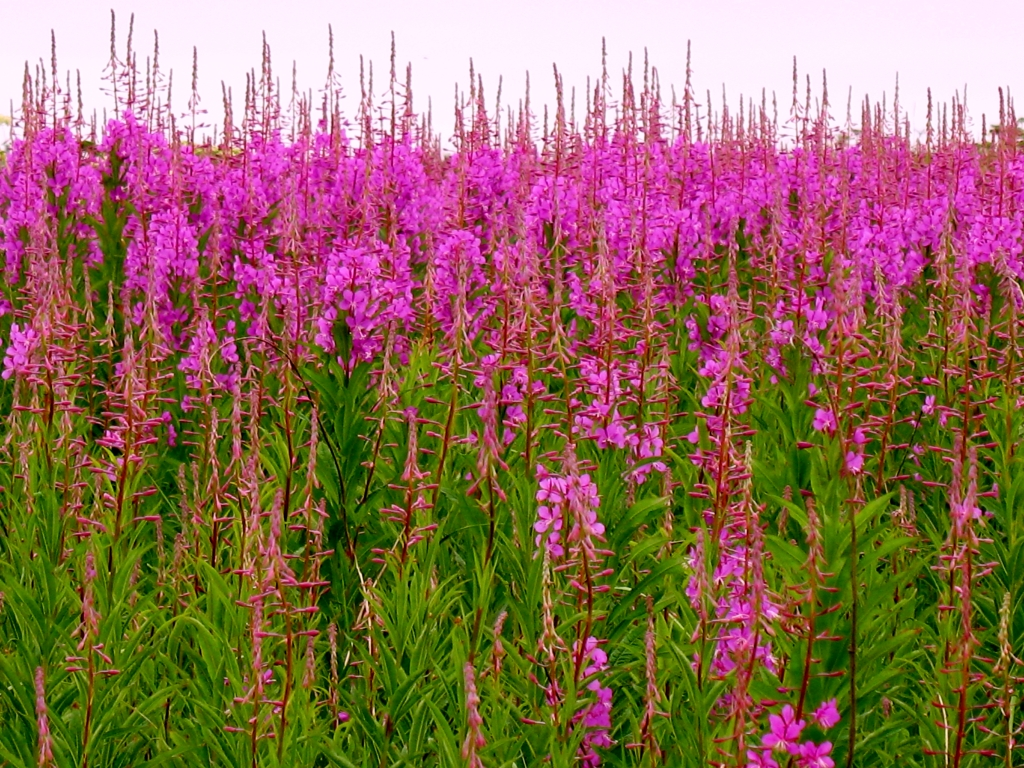 травы для потенции мужчин Каспийск