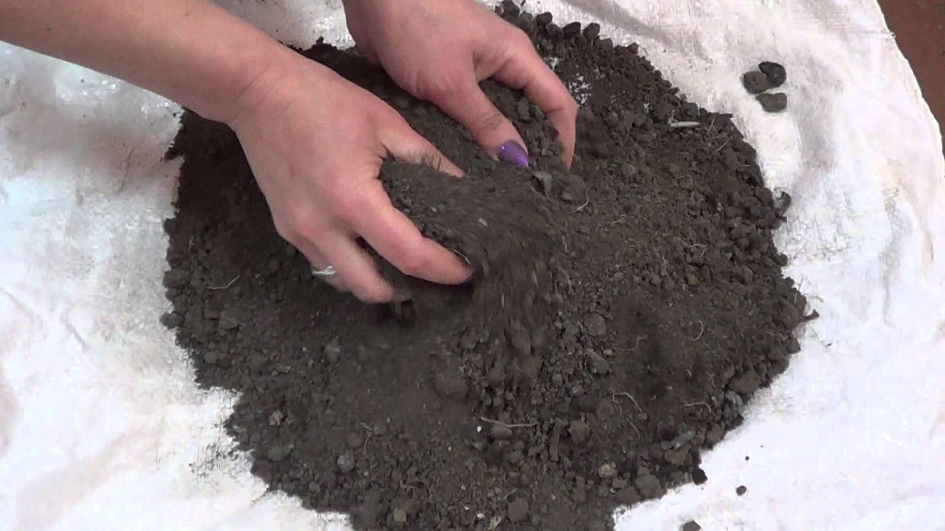 Посев лука порея на рассаду и в открытый грунт 7