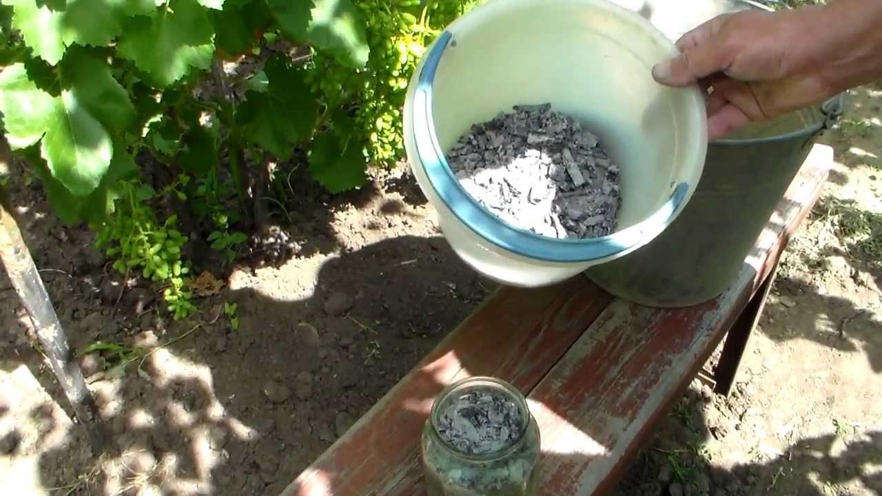 Картинки по запросу Удобрения для винограда