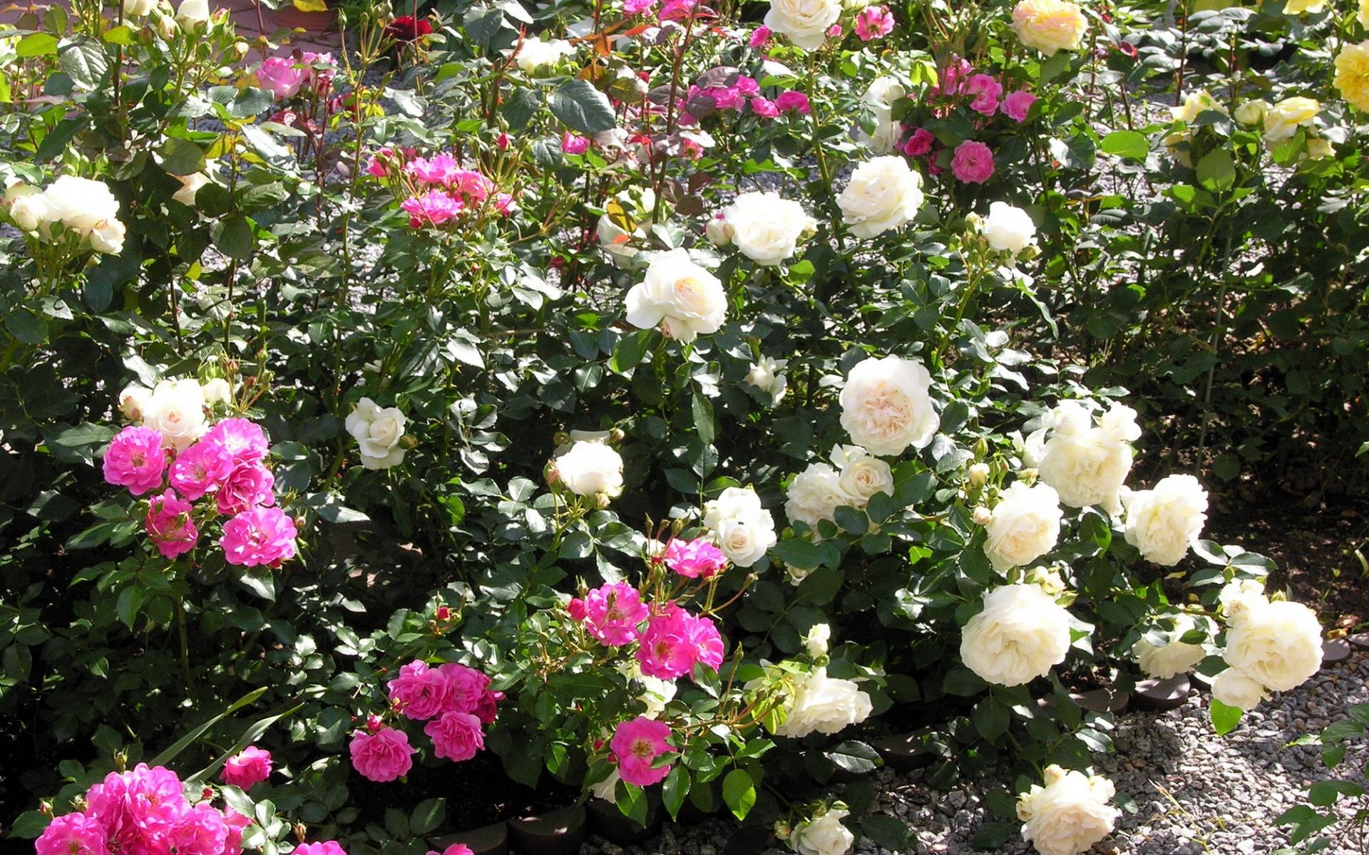 Чем обработать сад весной от болезней и вредителей