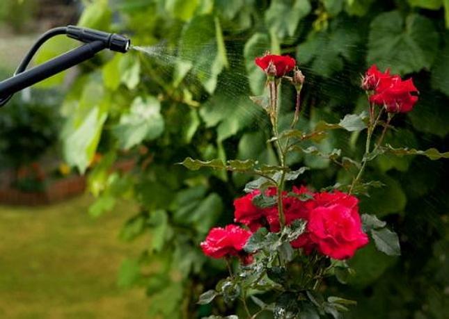 Чем обработать сад весной от вредителей и болезней и муравьев
