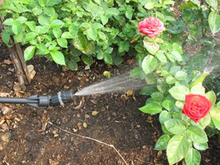 Подкормка роз весной и летом на даче и в домашних условиях 1