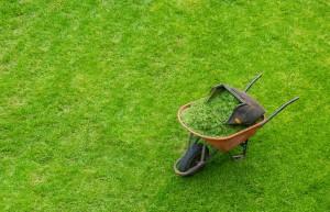 Сев газона