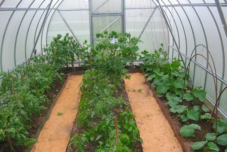 Когда выращивать рассаду в теплице 487