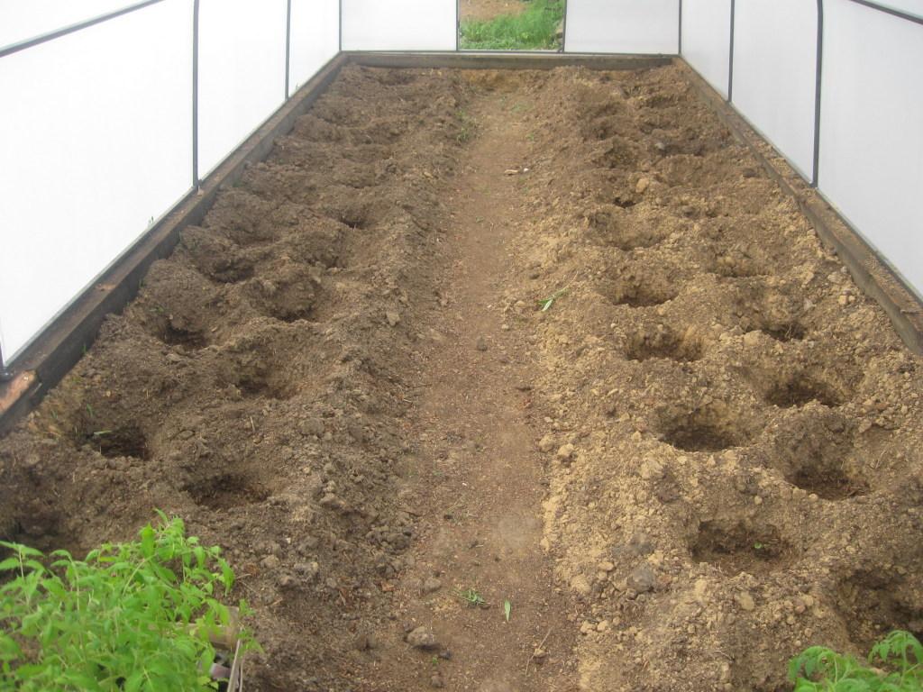 Как правильно высаживать помидоры на рассаду 202