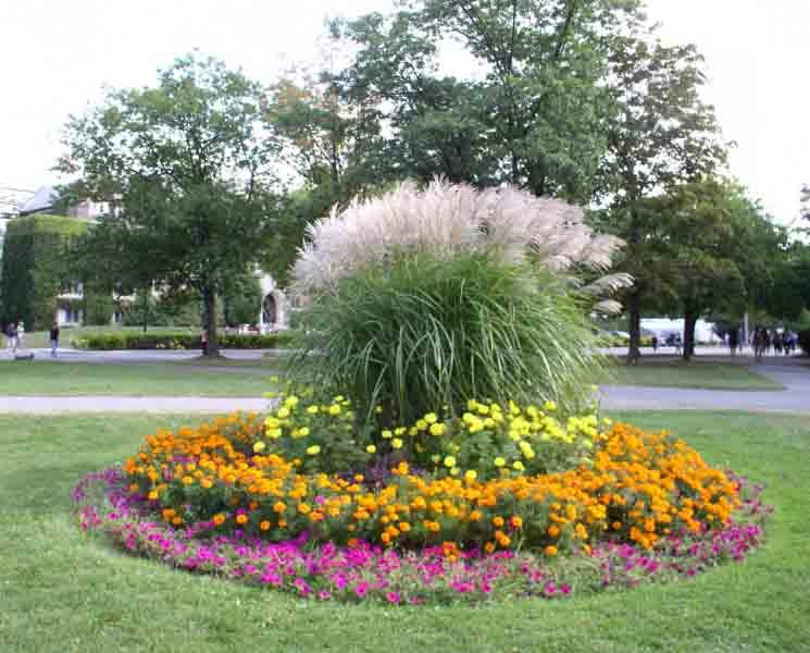 Клумба цветущая все лето