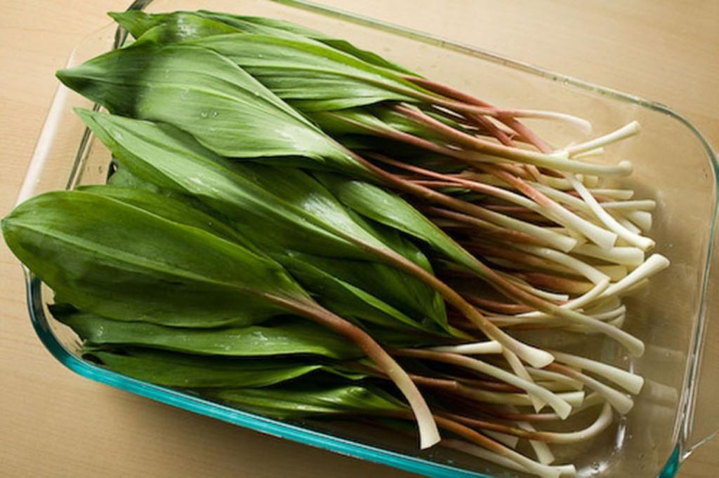 Сок, полученный из листьев, обладает эффективными целебными свойствами.