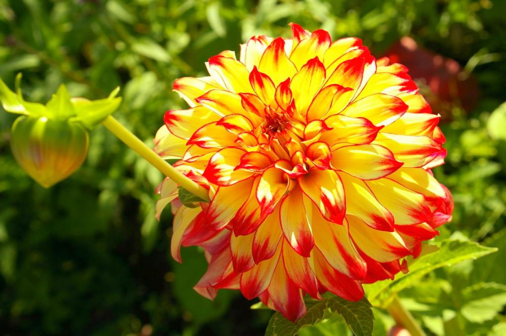 Какие многолетние цветы сажать на даче 193