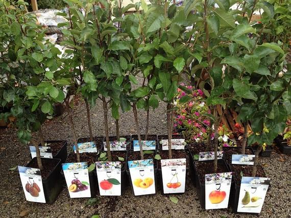 того, Новое в выращивании саженцев ягодников понимающе