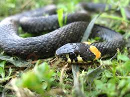 Избавиться от змей на дачном участке