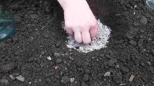 Подкормка кабачков в открытом грунте