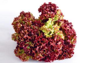 Выращивание салата лолло росса