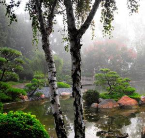 влаголюбивые деревья и кустарники для дачи