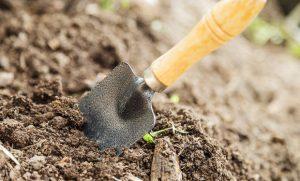 Как можно обеззаразить землю для рассады