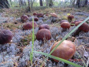 Как можно посадить грибы на даче в домашних условиях