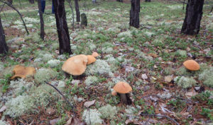 посадить грибы на даче в домашних условиях
