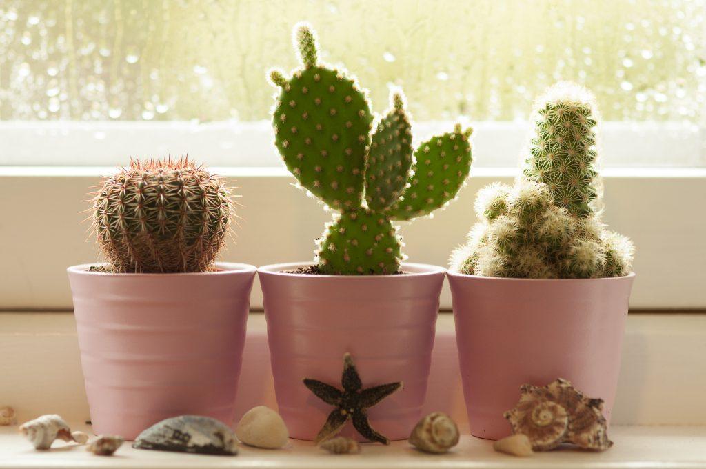 Как сажать кактусы без корней 33