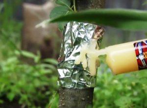 бороться с муравьями на деревьях