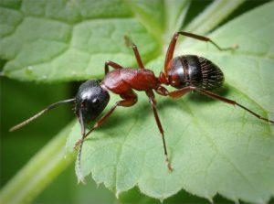 как можно вывести муравьев с грядки