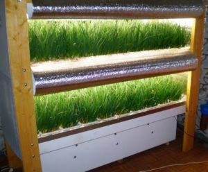 Гоидропонная установка для выращивания зелени