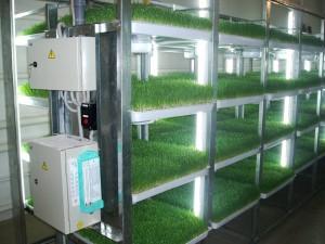 Гидропонная установка для выращивания зелени