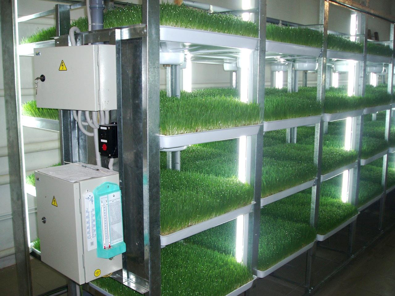 Гидропонная установка для выращивания зелени дома: сборка и 38