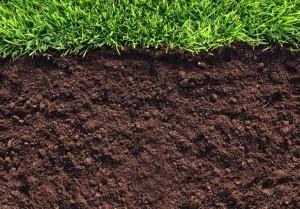 Как проверить кислотность почвы на даче