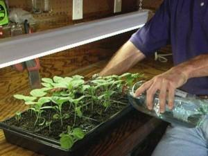 Как правильно приготовить удобрение для огурцов в домашних условиях