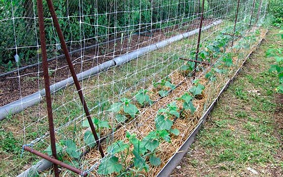 Как правильно делать грядки на огороде для моркови и лука 81