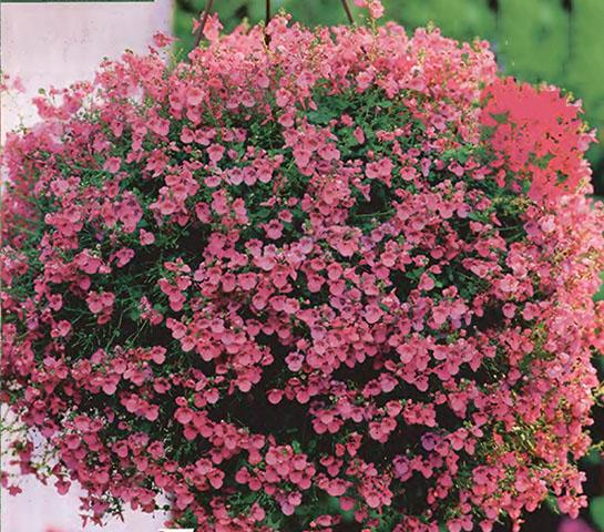Цветы ампельные садовые