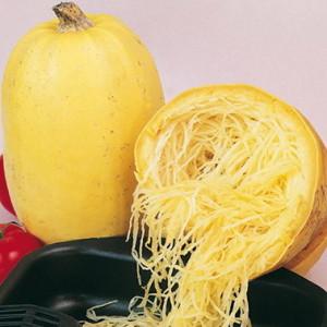 Выращивание кабачка спагетти