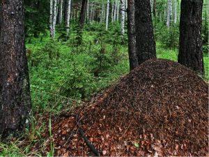 уничтожить муравейник