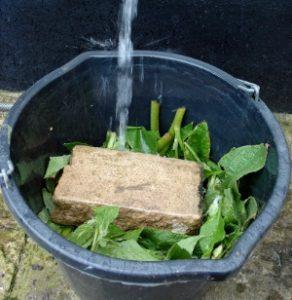 Удобрение травяными настоями