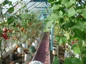 Способы разделения кустов растений