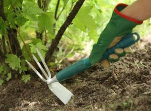 Зачем рыхлят почву при выращивании растений