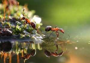 Как эффективно и навсегда избавиться от муравьев в огороде