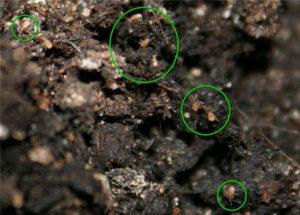 Как эффективно избавиться от мошек в земле комнатных растений