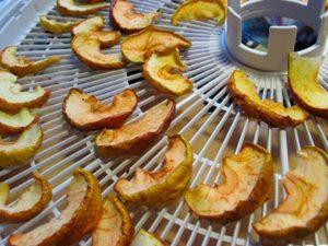 Как можно сделать сухофрукты из яблок в домашних условиях