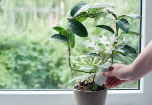 Как правильно применяется зола для комнатных растений