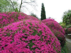 Лучшие цветущие кустарники для сада