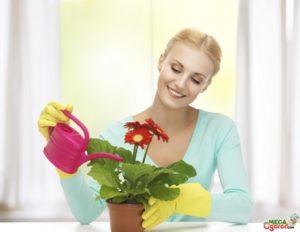 Можно ли поливать цветы чаем