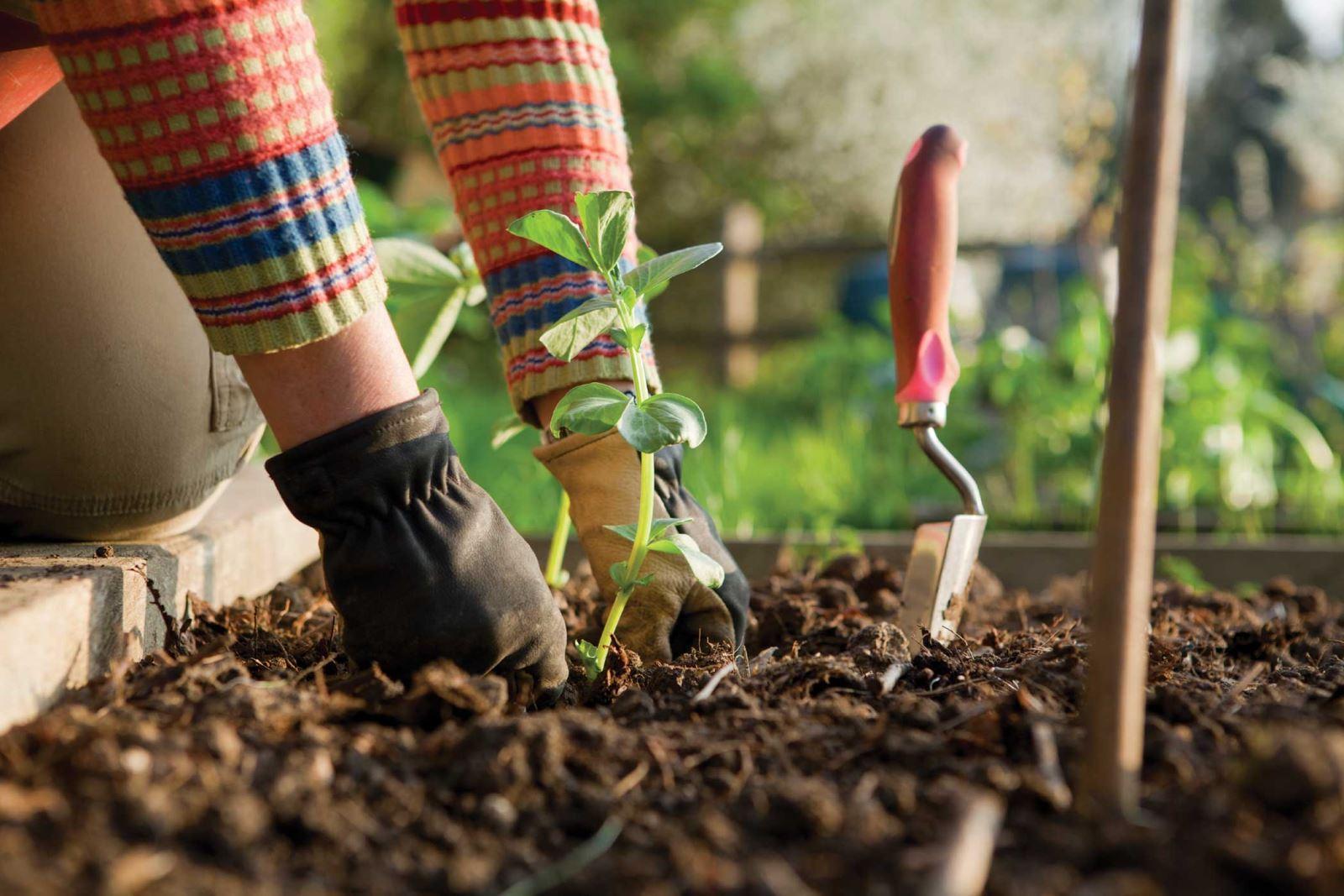 Что посадить на зиму на даче в теплице или огороде?