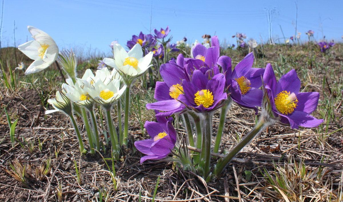Многолетние цветы для дачи для Сибири: фото с названиями