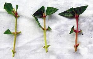 Размножение