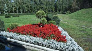 Сочетание цветов на клумбе