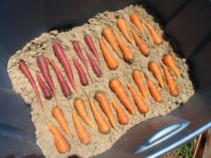 Хранить морковь