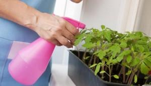 Подкормка помидоров перекисью водорода