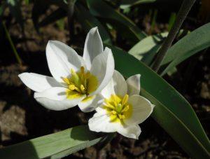 Какие есть неприхотливые цветы для дачи