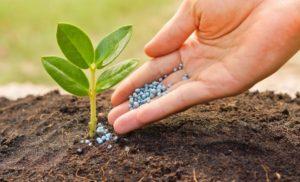Какие существуют удобрения для хвойных растений, и какое лучше